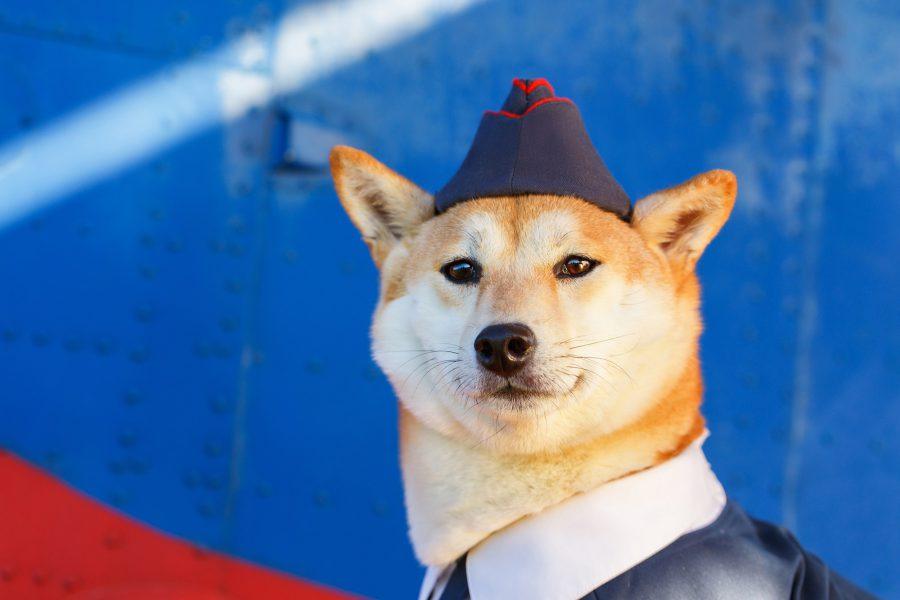 Berkenalan dengan Ras Lima Anjing Selebgram