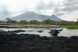 Menjelajah Taman Nasional Baluran, Afrika Kecil di Jawa