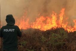 Kebakaran Hutan 2015 Seluas 39 Kali DKI Jakarta
