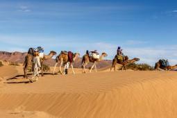 Menjelajah Gurun Sahara dari 5 Penemuan Unik