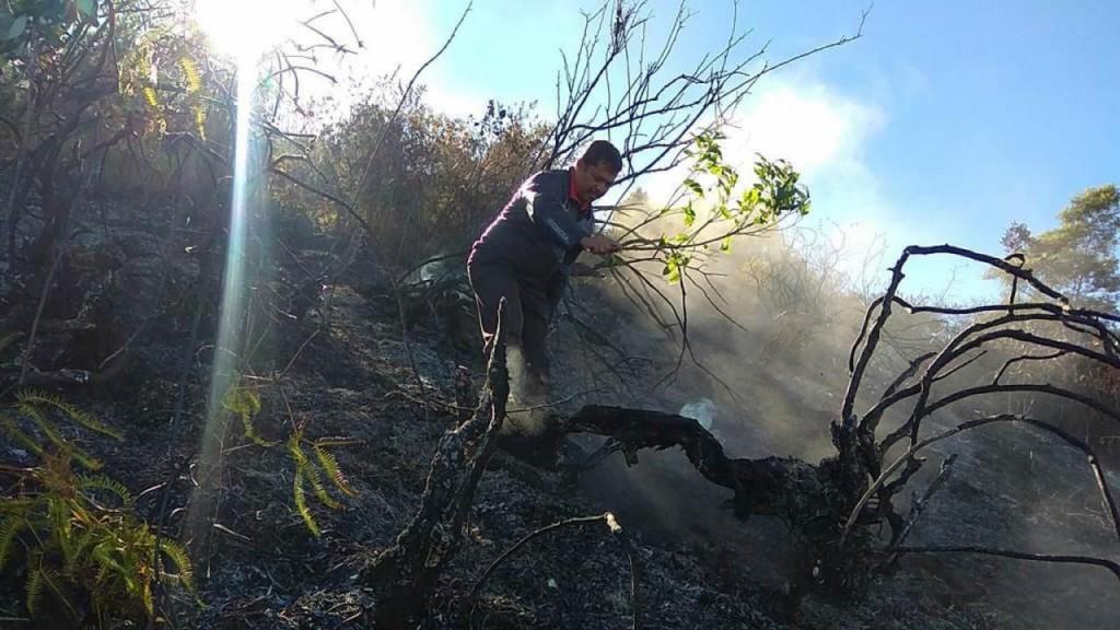 kebakaran gunung