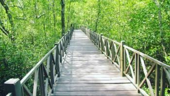 Hutan Mangrove (liputan6.com)