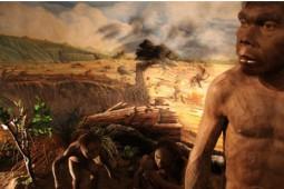 Pesona Manusia Purba di 5 Klaster Museum Sangiran