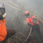 Area Kebakaran Hutan dan Lahan 5 Kali Luas Jakarta