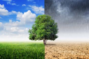 5 Makanan Favorit Ini Bakal Punah Akibat Perubahan Iklim