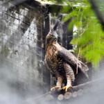 Kenali 3 Satwa Nasional yang Jadi Maskot Indonesia