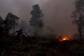 Berjibaku Memulihkan Ekosistem Gambut di Tengah Bara Karhutla
