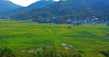 Berwisata ke Sawah Berbentuk Sarang Laba-Laba di Manggarai