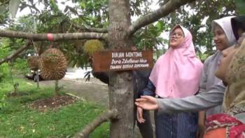 Taman Botani Sukorambi yang Wajib Didatangi Penyuka Durian