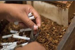Cuan Cukai Tembakau, Berkah di Balik Harga Rokok Naik