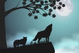 Misteri Hewan Liar hingga Susutnya Hutan di Balik Kematian Ratusan Ternak