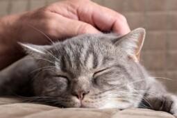 Sering Tak Disadari, Ini Gejala Kucing Terserang Virus Distemper