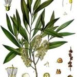 7 Produk Kecantikan yang Mengandung Eucalyptus