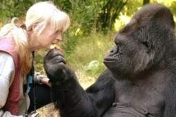Tak Hanya Gorila, Sederet Hewan Ini Diyakini Juga Cerdas