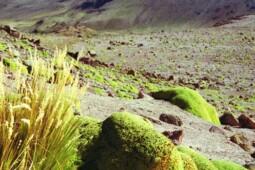 Berusia hingga Ribuan Tahun, Inikah Tumbuhan dan Hewan Tertua di Dunia?