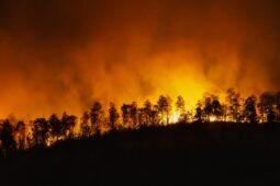 Ini Pemicu Pandemi di Masa Depan, Salah Satunya Kerusakan Lingkungan