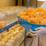 Tentang Cordyceps Militaris, Jamur Terbaik untuk Meningkatkan Imunitas