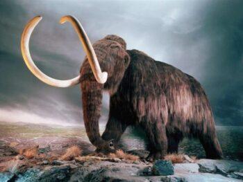 Gajah Mamooth (istimewa)
