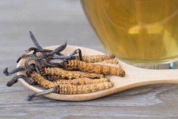Berpotensi Lawan Corona, Begini Cara Amain Konsumsi Jamur Cordyceps