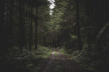 7 Hutan Paling Angker dan Mengerikan di Dunia, Berani ke Sana?