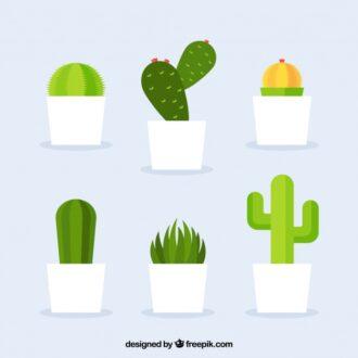 Tak Hanya Mempercantik Ruangan, Tanaman Kaktus Juga Baik untuk Kesehatan