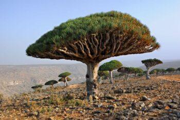 Mirip Tempat Tinggal Alien, Ini 6 Fakta di Balik Keindahan Pulau Socotra