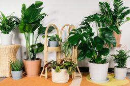 Hati-Hati, Mungkin Ini Penyebab Tanaman Hias di Rumah Anda Mati