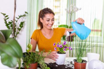 5 Tanaman Hias Murah Ini Bisa Mempercantik Rumah