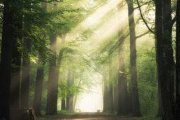 7 Fakta Mengerikan Aokigahara, Hutan untuk Bunuh Diri di Jepang