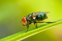 Jangan Makan Makanan yang Dihinggapi Lalat karena Inilah yang Terjadi