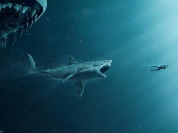 Hiu Megalodon Predator Purbakala Terbesar Penuh Misteri