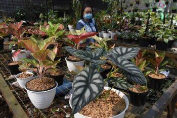 Ubah Hobi Merawat Tanaman Hias Jadi Ladang Rezeki, Simak Tipsnya