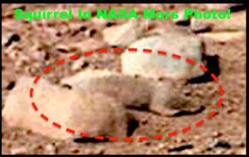 Tupai Alien Ditemukan Hidup di Planet Mars, Apa Kata Pakar?