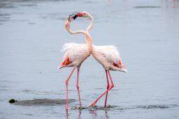 5 Satwa Ini Monogami, Mereka Setia Pada Satu Pasangan Seumur Hidup Loh