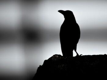 Hewan-Hewan Ini Punya Mitos Mengerikan, Percaya?