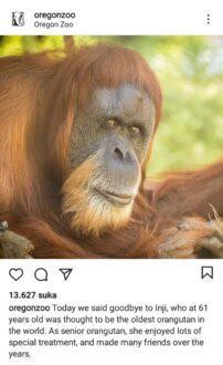 Unggahan Oregon Zoo tentang kabar kematian Inji (Instagram)