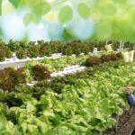 Kisah Pemilik Disc Tarra Banting Setir Jadi Petani Sayur