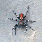 Hore! Ada 15 Spesies Baru Ditemukan Selama 2020